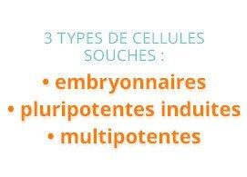 Trois types de cellules souches : embryonnaires, pluripotentes induites, multipotentes