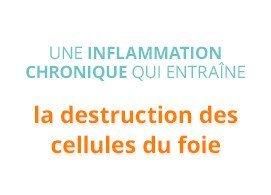 Une inflammation chronique qui entraine la destruction des cellules du foie