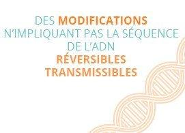Des modifications, n'impliquant pas la séquence de l'ADN, réversibles et transmissibles