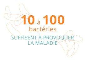 10 à 100 bactéries suffisent à provoquer la maladie