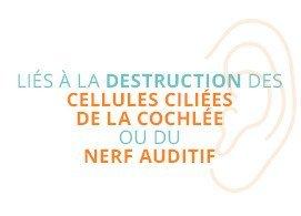 Liés à la destruction des cellules ciliées de la cochlée ou du nerf auditif