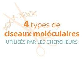 4 types de ciseaux moléculaires utilisés par les chercheurs