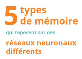 5 types de mémoire qui reposent sur des réseaux neuronaux différents