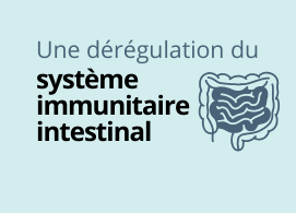 Une dérégulation du système immunitaire intestinal