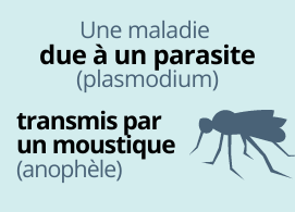 Une maladie due à un parasite (plasmodium) transmis par un moustique (anophèle)