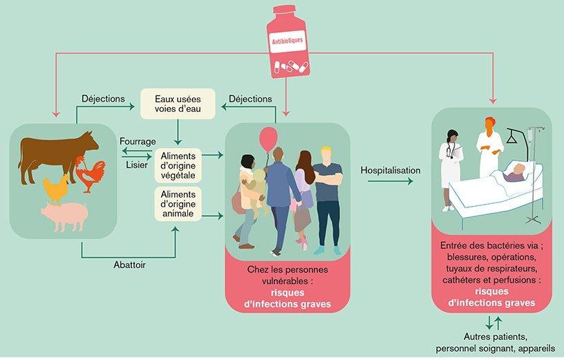 Schéma : Comment les bactéries résistantes se propagent