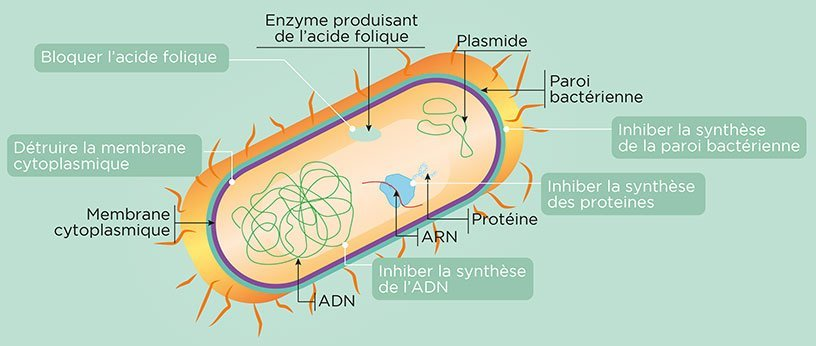 Les modes d'action des antibiotiques