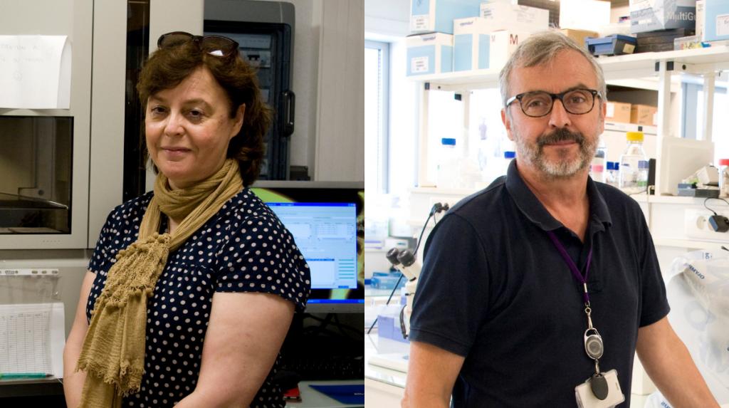 Isabelle Audo (à gauche), coresponsable de l'équipe « Identification des défauts de gènes entrainant des maladies oculaires progressives ou non progressives » et Olivier Goureau (à droite), responsable de l'équipe « Développement et régénération de la rétine : apport des cellules souches pluripotentes » ©Inserm/François Guénet