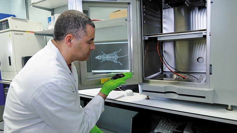 Grrâce à une machine UltraFocus qui calcule la densité osseuse, le chercheur, obtient une radiographie de la souris.