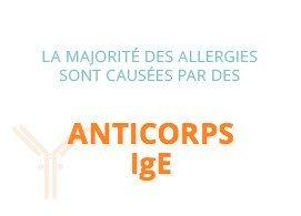 La majorité des allergies sont causées par des anticorps IgE
