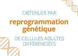 Obtenues par reprogrammation génétique de cellules adultes différenciées