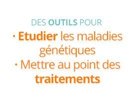 Des outils pour : étudier les maladies génétiques, mettre au point des traitements
