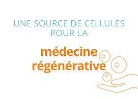 Une source de cellules pour la médecine régénérative