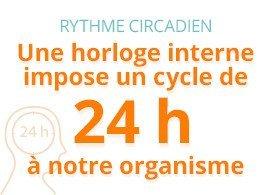 Rythme circadien : une horloge interne impose un cycle de 24 heures à notre organisme