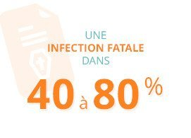 Une infection fatale dans 40 à 80 %